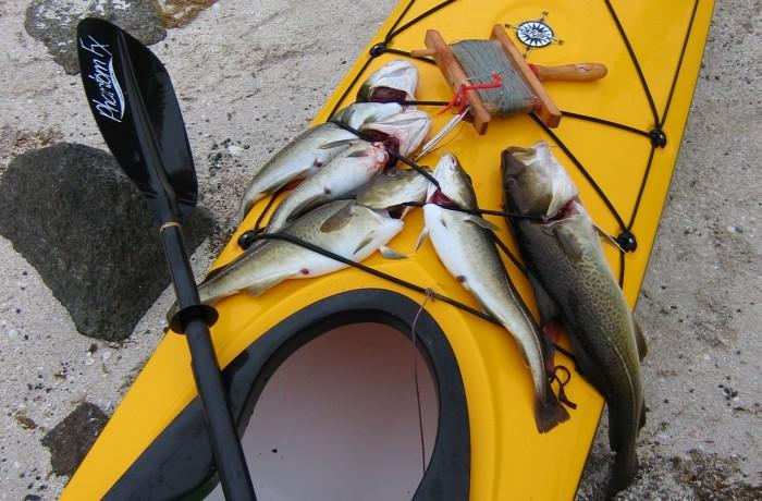 Kajakfiske i Lofoten!