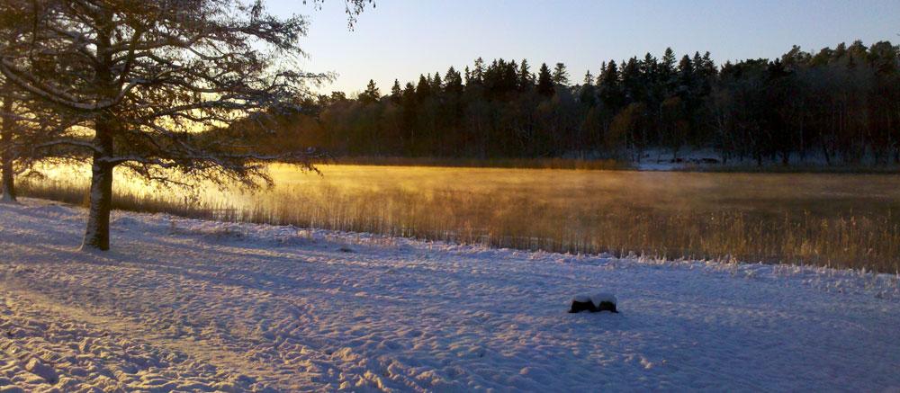 1000-träd-och-is